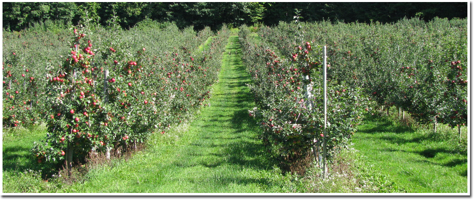 The Orchards at The Apple Barn