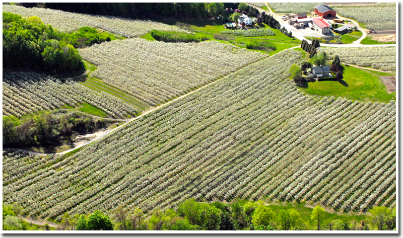 The History of Southern Vermont Orchards - The Apple Barn ...